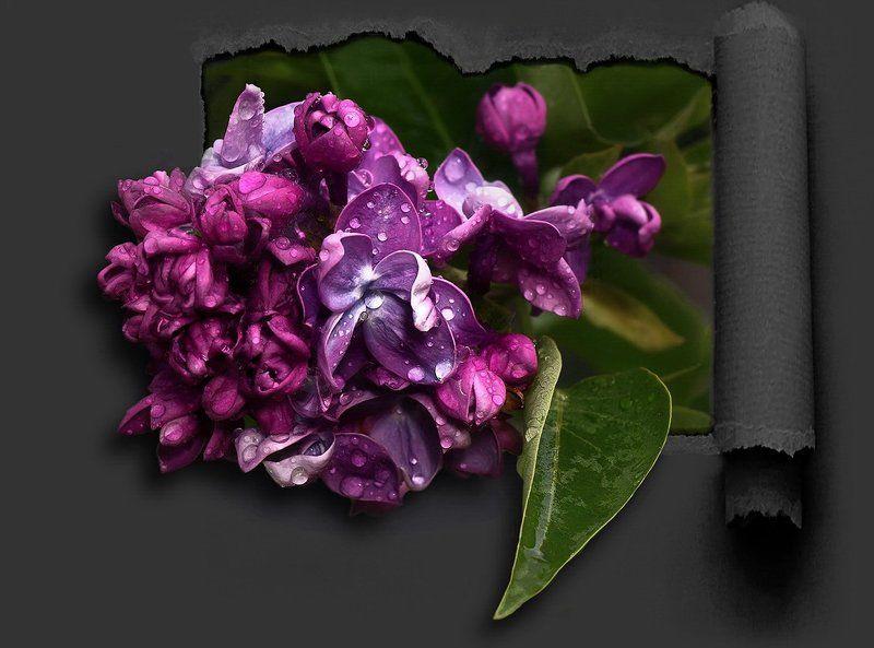 Просто цветы...photo preview