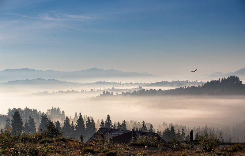 Горы, Карпаты, Осень, Рассвет, Сентябрь, Туман, Украина, Утро Осенняя с птицейphoto preview