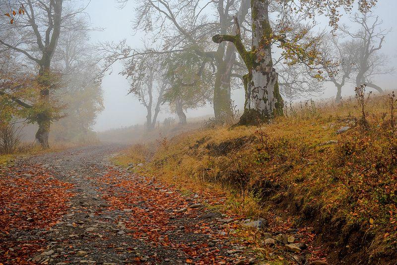 грузия, осень, бакуриани, лес, туман Туманы горной Грузииphoto preview