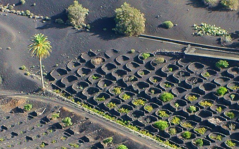 Испания, Канарские острова, Лансароте, aerial Одинокая пальма 2photo preview