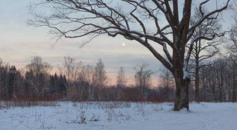 пушкин, царское село, спб, питер, зима Вы говорите, что февраль суров..?photo preview