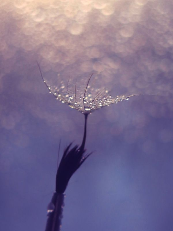 кисть, капли, семена, пушинка, арт, дизайн, картинка, красивая, макро, держать, лёгкость photo preview