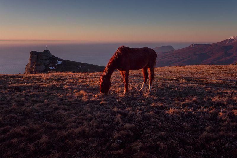 Огненная лошадкаphoto preview