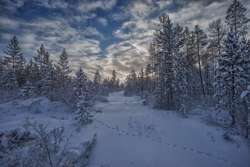 зима, якутия, нерюнгри Лисья тропаphoto preview