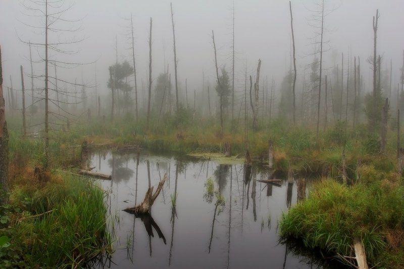 болото photo preview