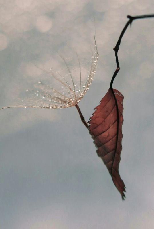 Лист, ветка, капли, зима, арт, красиво, пушинка, макро, природа photo preview