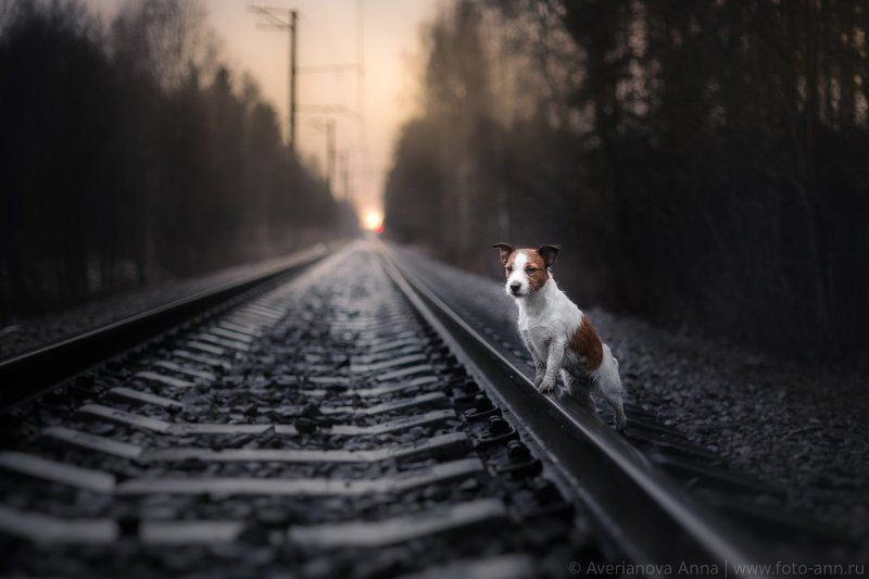 собака на рельсахphoto preview