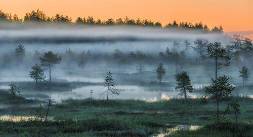 Леса России: Север, Юг, Запад, Восток.