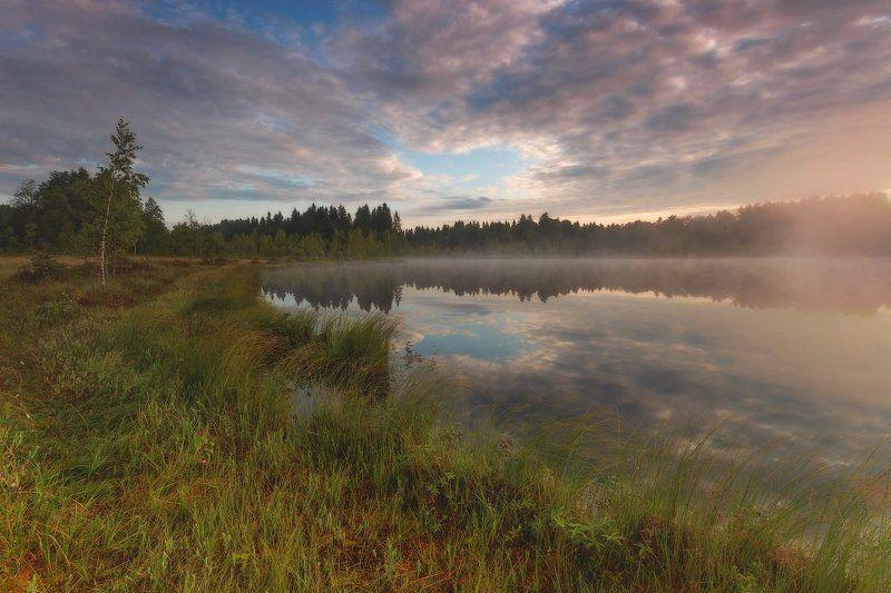 Landscape, Болото, Лето, Луга, Пейзаж, Питер, Туман День летаphoto preview