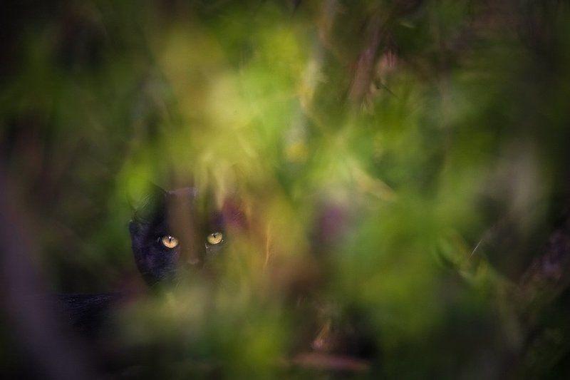 Эти глаза напротивphoto preview