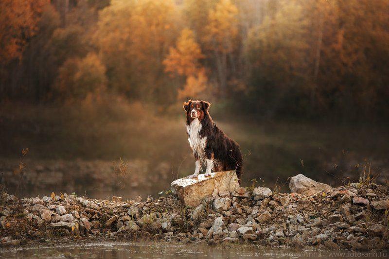 собака, осень, природа на осеннем закатеphoto preview