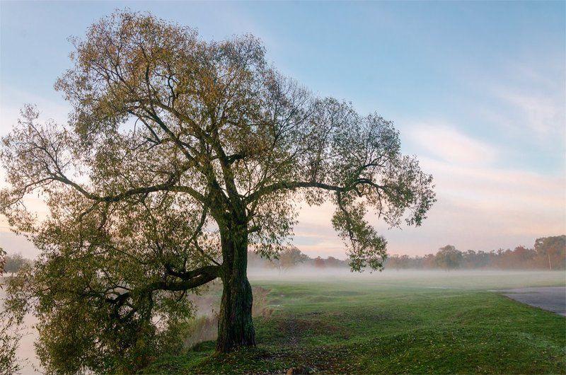 александр березуцкий,nevant60, пейзаж, андреевский луг Нежное утроphoto preview