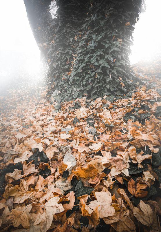 autumn, fall, landscape, trees, forest, woods, bulgaria, colors, nature, fog, mist, rain, october, sky, clouds, leaves, orange, desaturated Autumn Mysticphoto preview