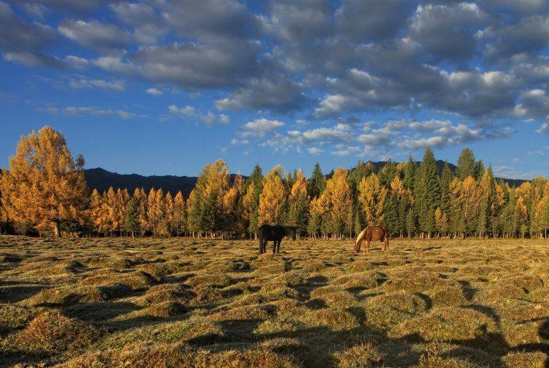 алтай, горный алтай, джазатор, беляши, осень Погожий денёк в Беляшахphoto preview