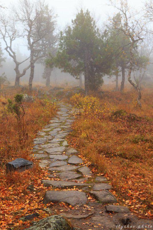 осень, туман, листва, пейзаж, дорожка, лес, природа, день, урал, россия По дороге из желтого кирпичаphoto preview