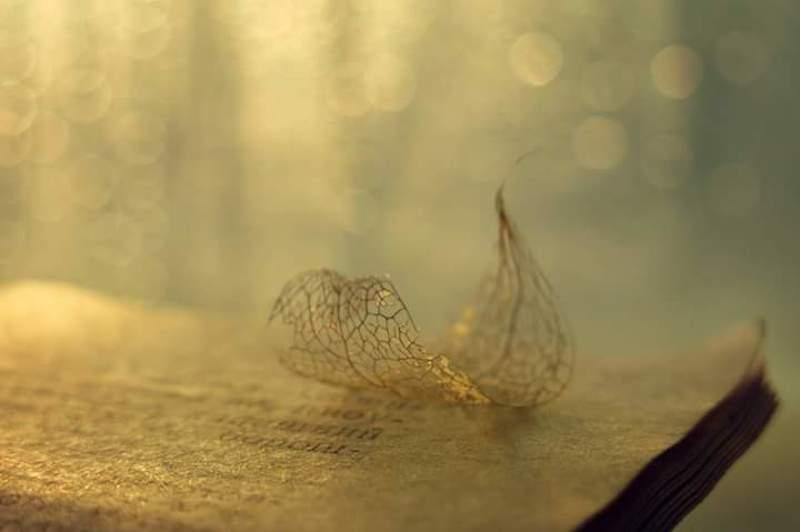 Физалис, лепесток, книга, страница, лист, свет, солнечный, теплый, закат photo preview