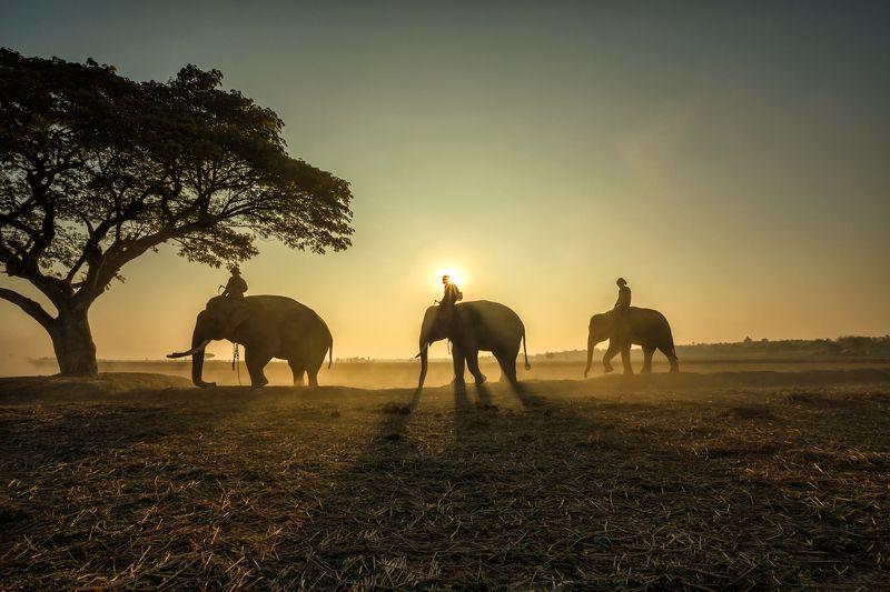 animal,elephant,silhouette,People,safari,asia, Outside of safari photo preview