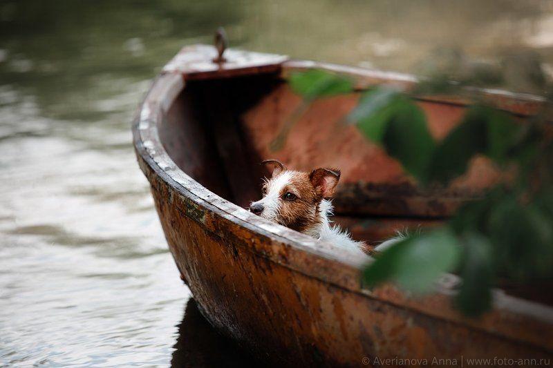 собака, природа, озеро, лодка в лодкеphoto preview
