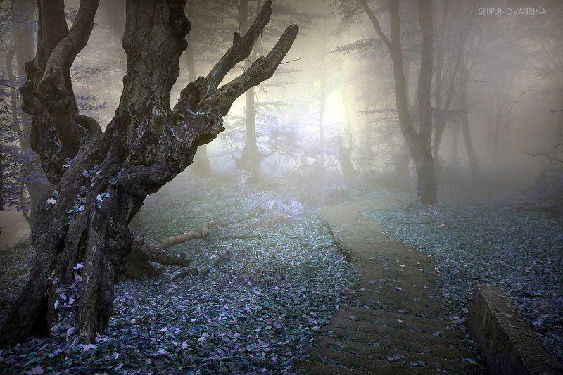 Сказочный лес 7photo preview