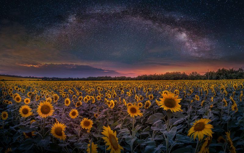 astrophotography, astroscape, astronomy, galaxy, milky way, nightscape, night, sky, stars, long exposure, nature, bulgaria, space, panorama, sunflowers, summer StarFlowers / Звездогледphoto preview