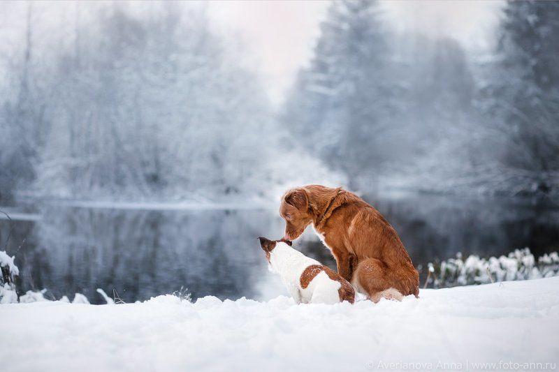 собака, зима, природа photo preview