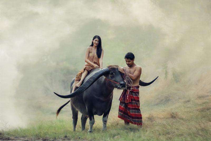 love, buffalo,couple,thai,thailand Thi-Baanphoto preview