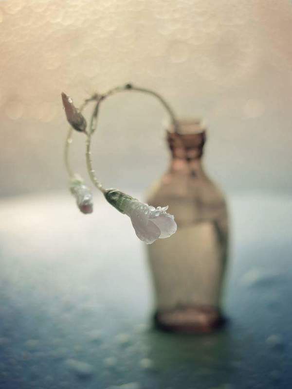Кислица, цветок, природа, капли, бутылка, арт, натюрморт С кислицейphoto preview