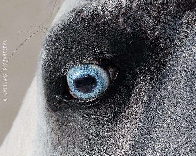 horse, head, detail, eye, blue, лошадь, глаза, взгляд Зеркало душиphoto preview