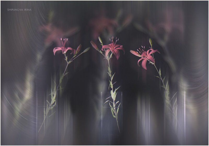 лилии коллаж art Три лилииphoto preview