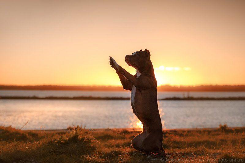 собака, рассвет, солнце, природа На рассвете photo preview