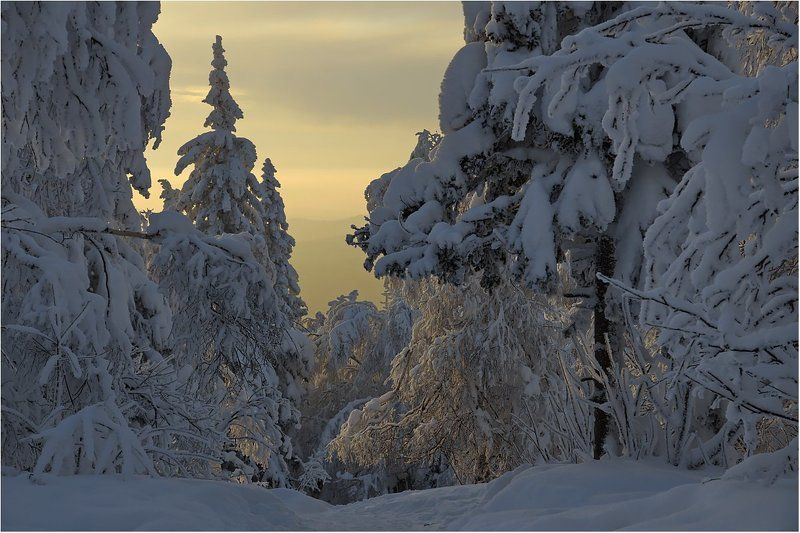 зима,закат,снег,деревья Спускался лёгкой поступью закат...photo preview