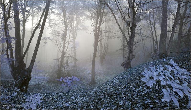Сказочный лес 8photo preview