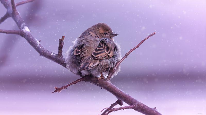 природа, лес, животные, птицы ... скоро весна ? :)photo preview