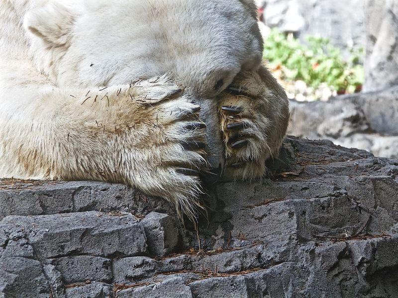 Зоопарк... или о чём плачут медведи?photo preview