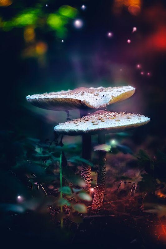 грибы, макро, свет, лес, светлячки, листья, блики В стране сказокphoto preview