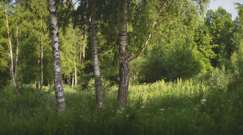 пушкин, царское село, спб, питер, лето Мечты о лете...photo preview