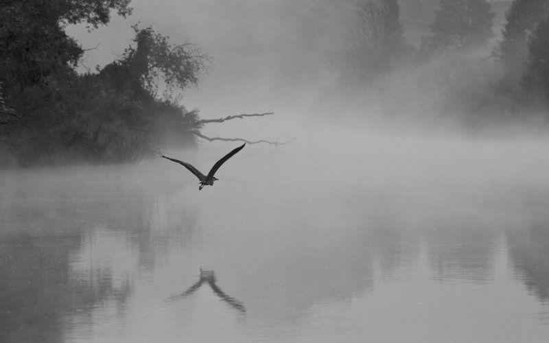 природа птица цапля река упа якшино Одинокая цапляphoto preview