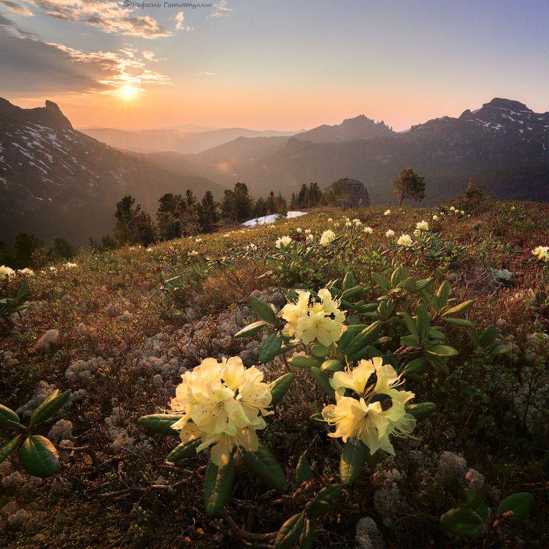красноярский край, западные саяны, национальный парк  ергаки, закат, горы, рододендроны. Рододендроныphoto preview