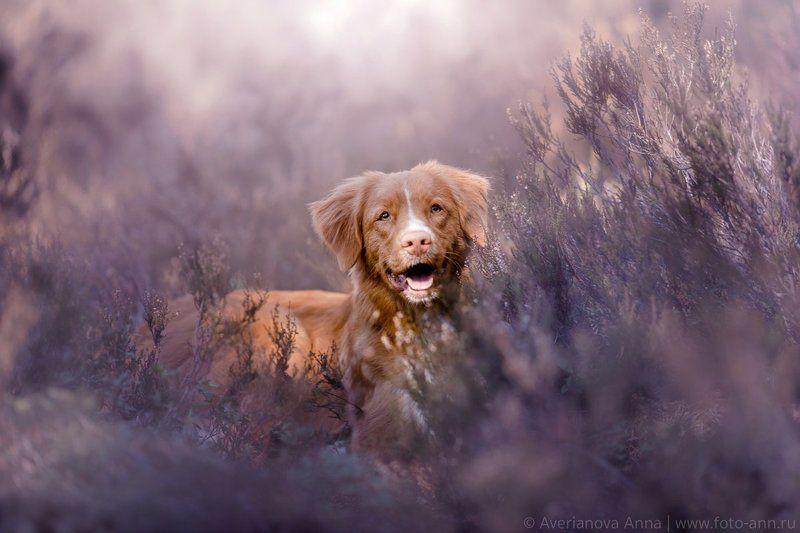 собака, природа, вереск весна)))photo preview