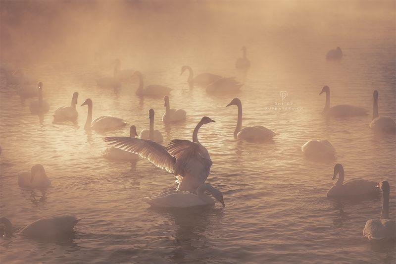 Лебединое озеро на рассветеphoto preview