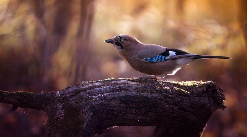природа, лес, животные, птицы Теплым утромphoto preview
