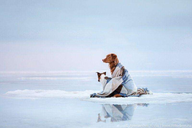 собака, природа, озеро, Ладога На льдинеphoto preview