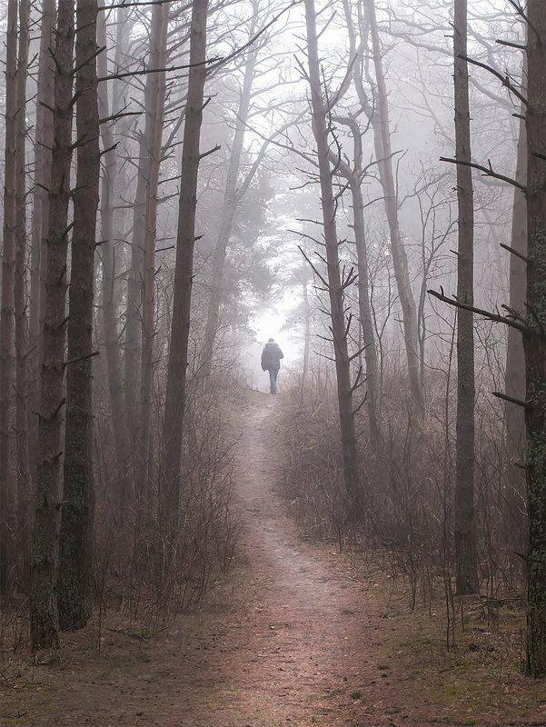 forest,fog,man Oдинокий путешественникphoto preview