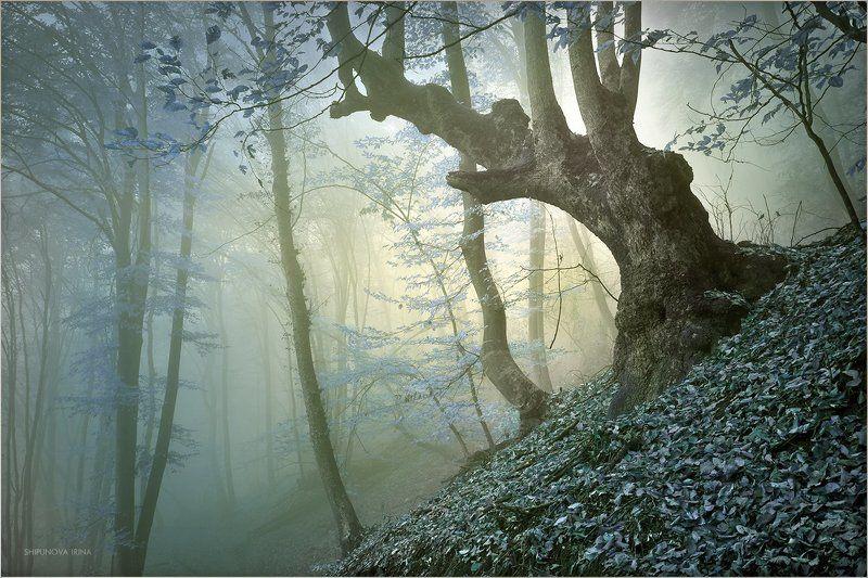 Сказочный лес 9photo preview