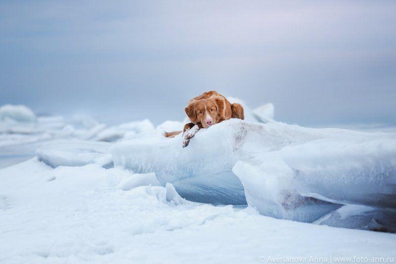 собака, природа, зима, снег, торосы на озереphoto preview