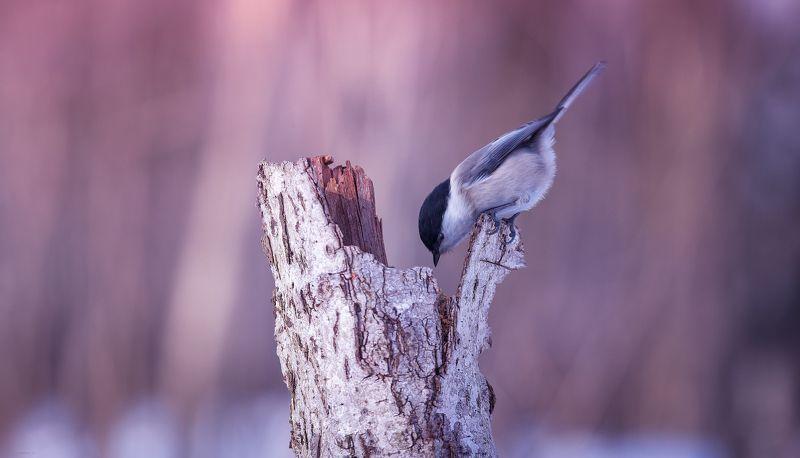 природа, лес, животные, птицы ... э эээй, есть кто там ? :)photo preview