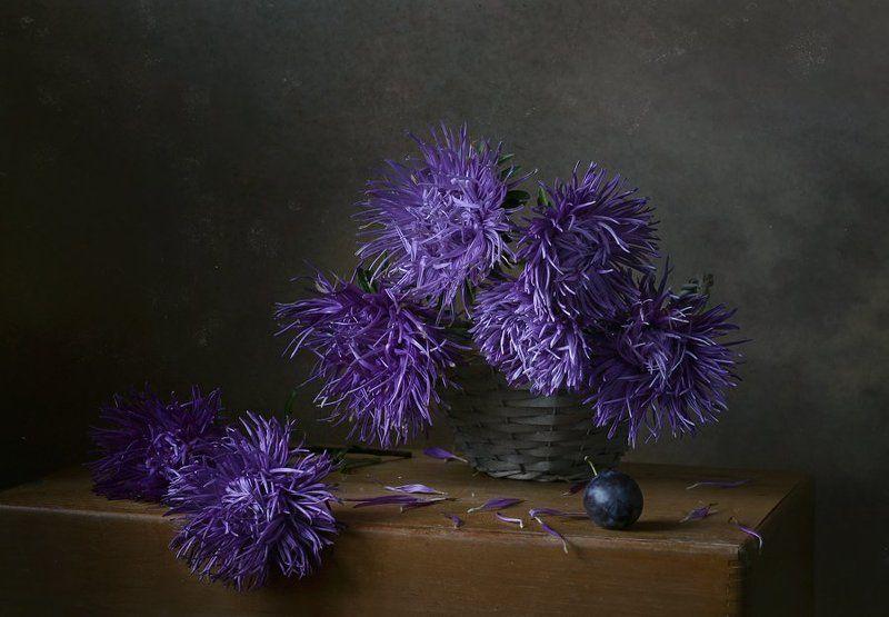 натюрморт, цветы, астры, синий, слива С астрамиphoto preview