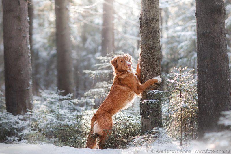 собака, природа, зима В сказочном зимнем лесуphoto preview