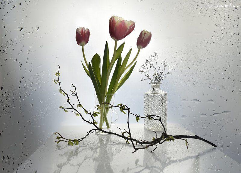 Поторопить весну...)photo preview
