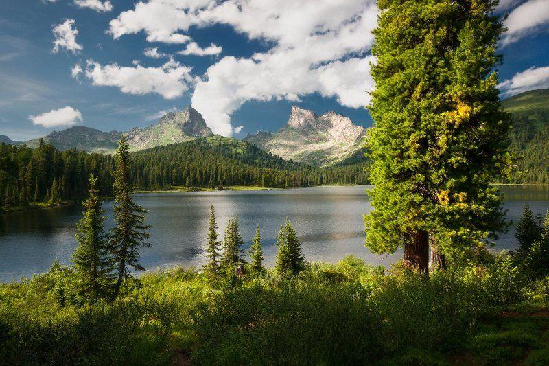 ергаки, горы, светлое, саяны, озеро, лето Солнечные Ергакиphoto preview